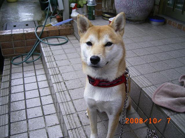 シャワ-トイレ(ミミの父ちゃん)のきまぐれなつぶやき!!  5d112e9b62